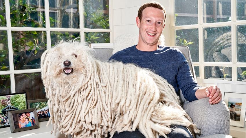 Zuckerberg whatsapp beast
