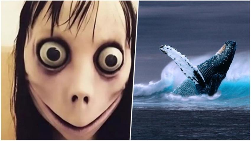 momo mavi balina