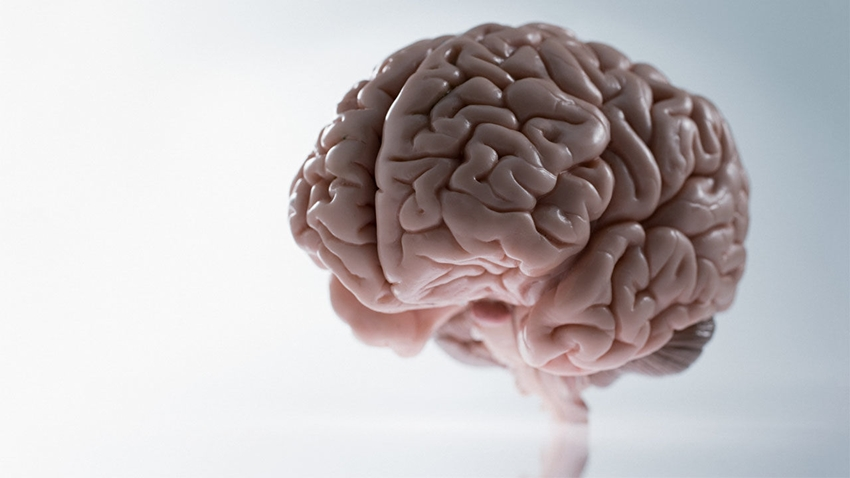 küçük beyin antisosyal