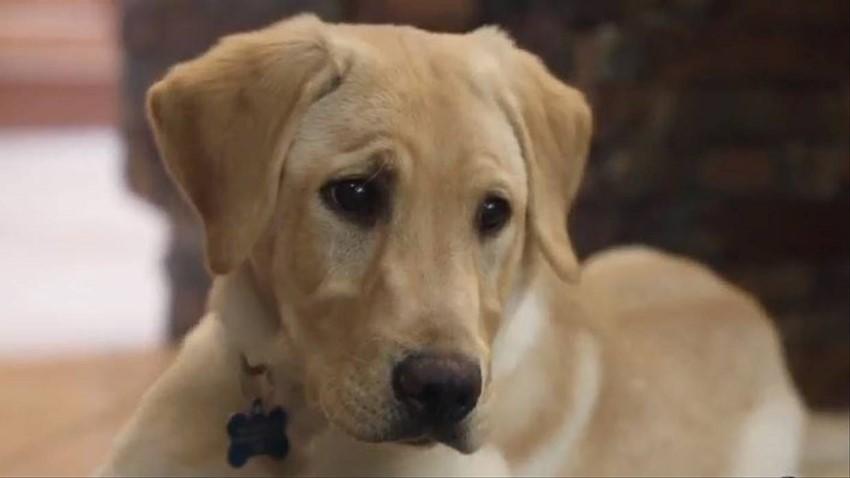 Amerikalı Çift Ölen Köpek Klonlattı