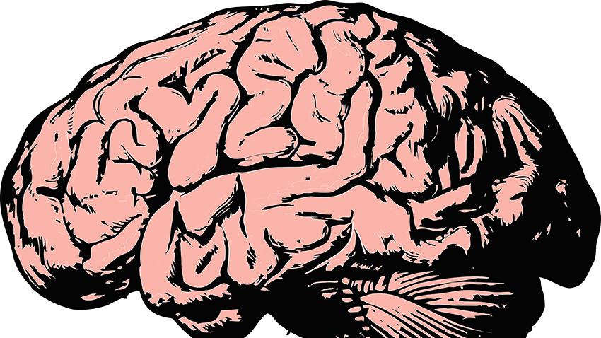Beyinde 9 Farklı Cinsiyet Keşfedildi