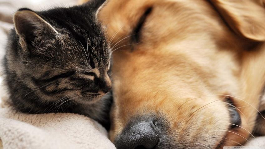 çin kedi ve köpek eti
