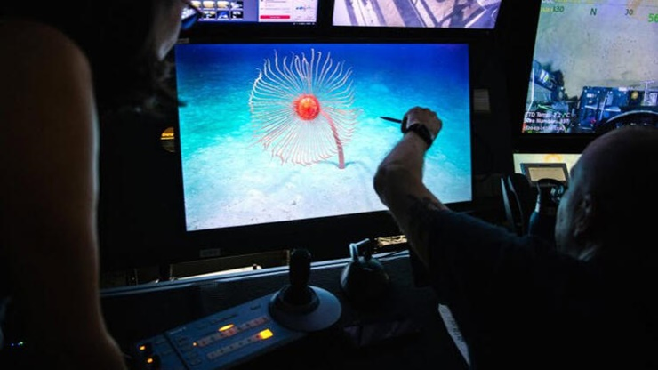 Okyanusun En Uzun Canlısı Keşfedildi