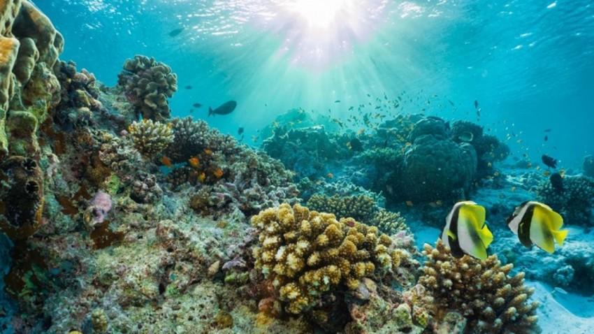 Korona Sonrasi Denizlerde Biyocesitlilik Artacak