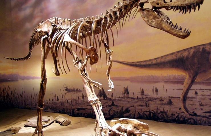 70 yil oncesine ait dinozor fosili bulundu