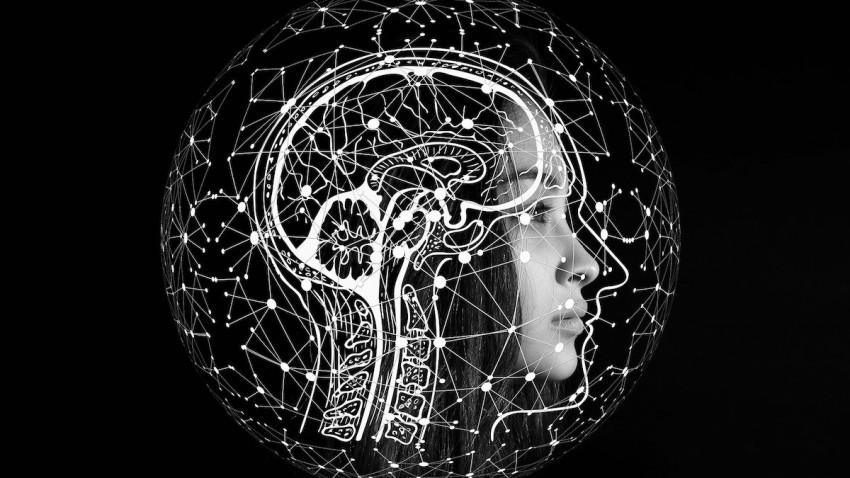 insan-kafatasinda-yeni-organ-bulundu