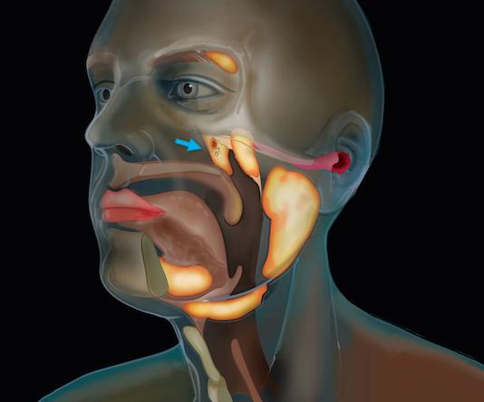 insan-kafatasinda-yeni-organ-bulunmus-olabilir