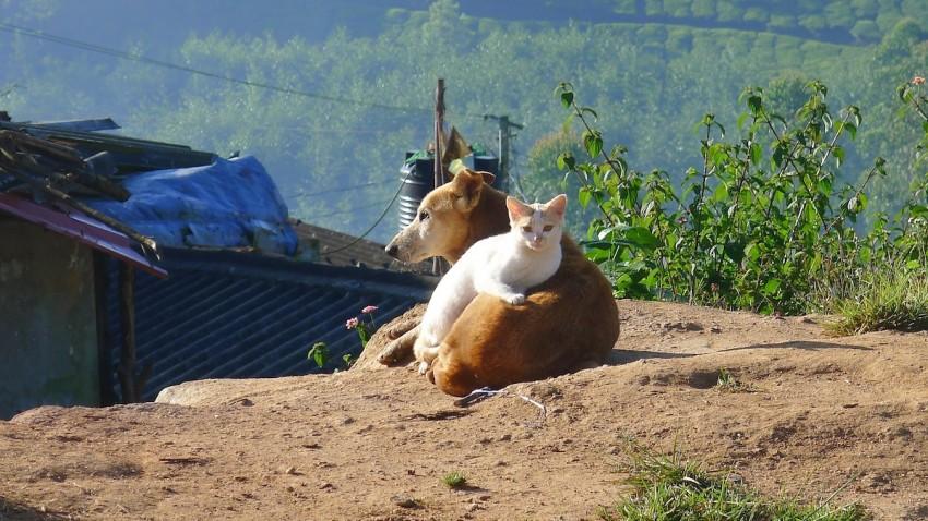 kediler-kopekler-karantina
