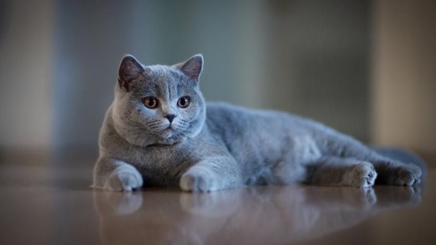Kedilerin Garip Davranışları Bilim İnsanlarınca Açıklandı!