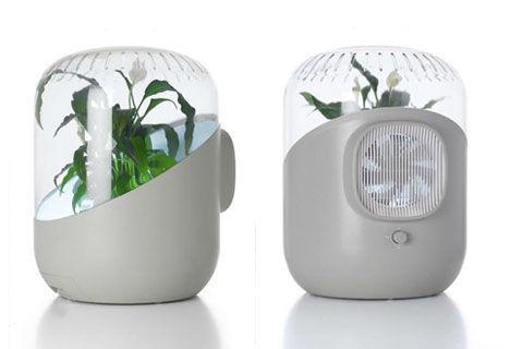 Bitki destekli hava temizleyici