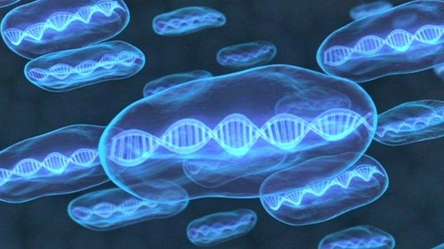 Rusya, Her Canlının DNA'sının Toplandığı Nuh'un Gemisini Yapıyor!
