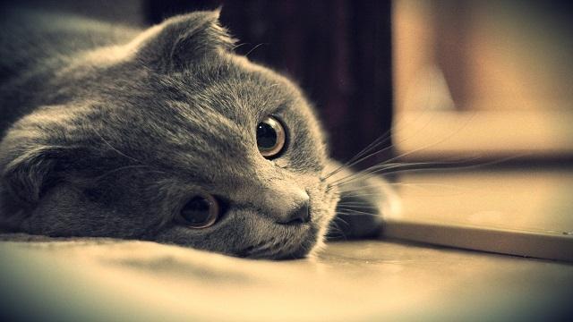 Facebook'ta Kedi Sahipleri Üzgün, Köpek Sahipleri Neşeli
