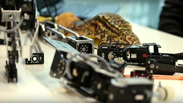 Canlı Timsahları İzleyen Robot Sürüngenler ile Tanışın!