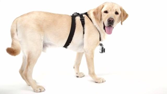 Artık Köpeğinize GoPro Takabileceksiniz