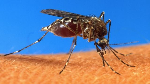 Artık Sivrisineklerden Telefonunuz Yardımıyla Kurtulabileceksiniz
