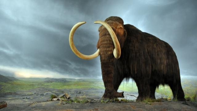 Bilim Adamları Mamutları Canlandırmaya Çok Yaklaştılar