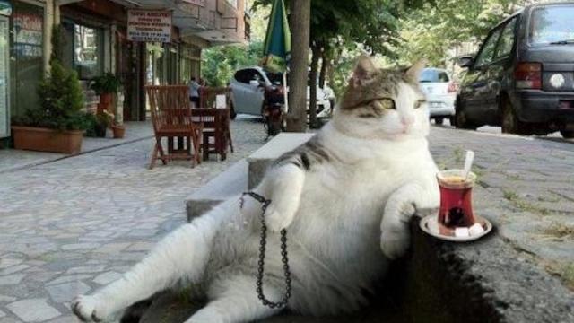 Bilime Göre Evcil Kedilerin Anavatanı Türkiye