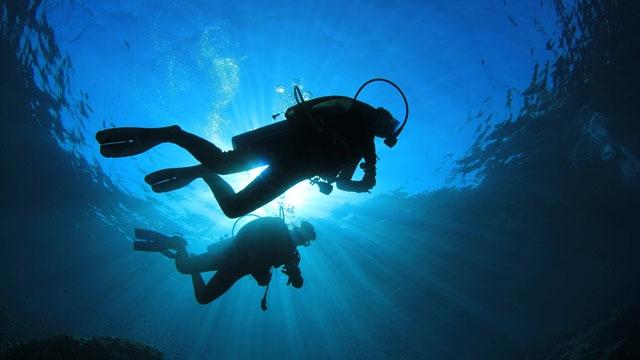 Google'dan Yeni Hizmet: Google Fish View ile Denizler Altında Seyahat Ediyoruz