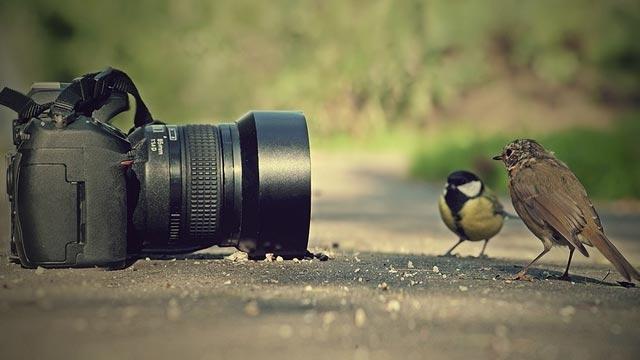 Instagram'da Profesyonel Bir Fotoğrafçı Kadar Popüler Olmanın Sırları
