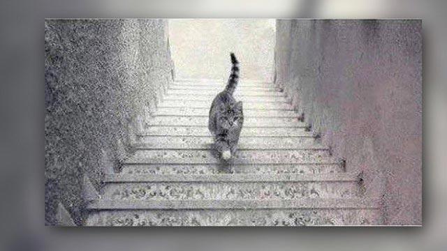 Sosyal Medya Bir Kedinin Peşinden Gidiyor: Ama Aşağı mı Yukarı mı?