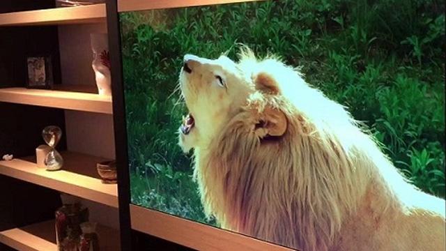 Panasonic Şeffaf Ekranlı Televizyonunu Tanıttı