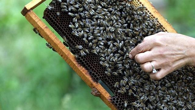 İnsanları Sokmayan 'Mülayim' Arılar Expo 2016'da Sergileniyor