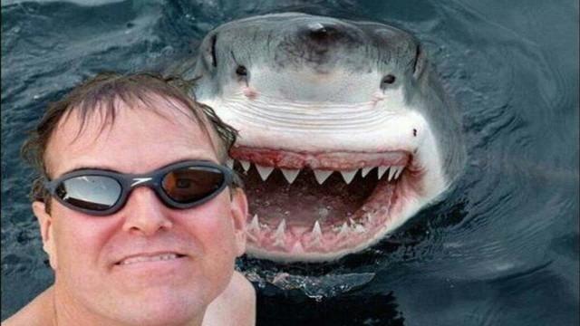 Köpekbalıkları ile Yüzmek Selfie Çekmekten Daha Güvenli