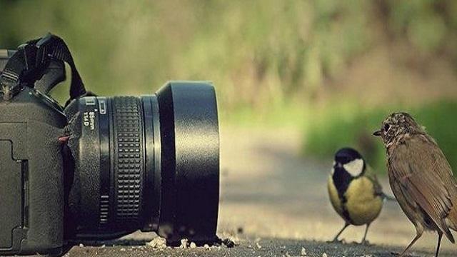 Dijital Fotoğraf Makinesi Alırken Nelere Dikkat Etmeliyiz?