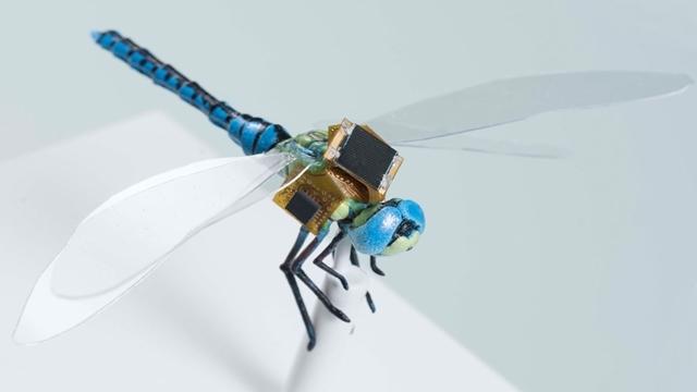 Bilim İnsanları Cyborg Helikopter Böceği Geliştiriyor
