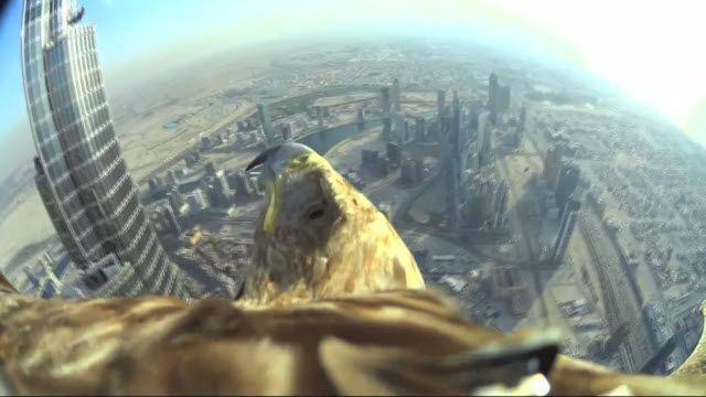 Dubai'de Kameralı Bir Kartalın Seferi Yayınlandı