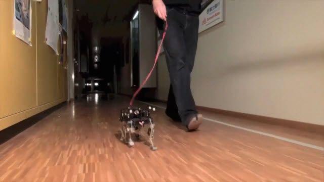 Karşınızda Robot Kedi Cheetah Cub
