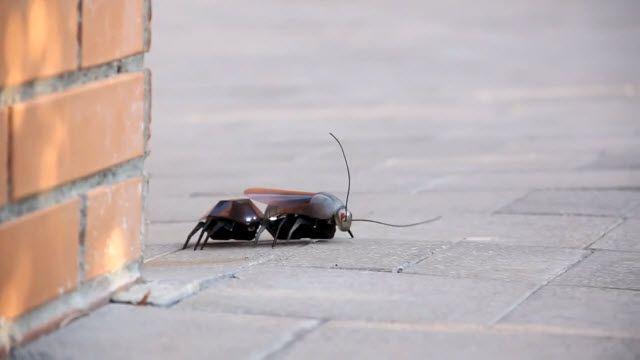 iPhone ile Kontrol Edilen Robot Böcek