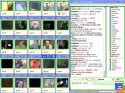 Camfrog Video Chat 2