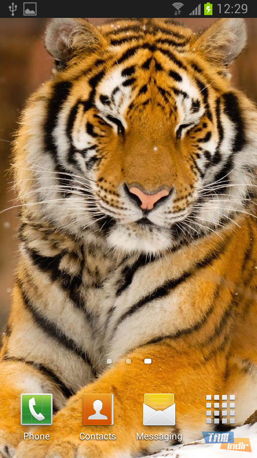 tiger live wallpaper ndir android i in canl duvar