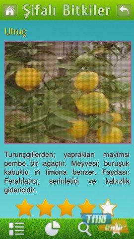 Şifalı bitkiler doğal tedavi şifalı otlar ekran