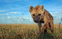 Afrika`da Vahşi Yaşam Teması