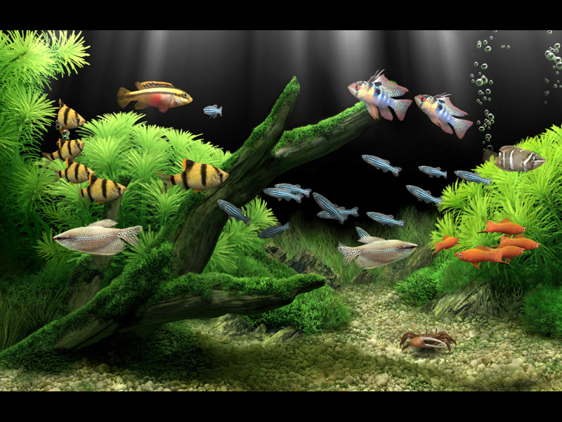 Wallpaper Hp 3d Bergerak: Dream Aquarium İndir
