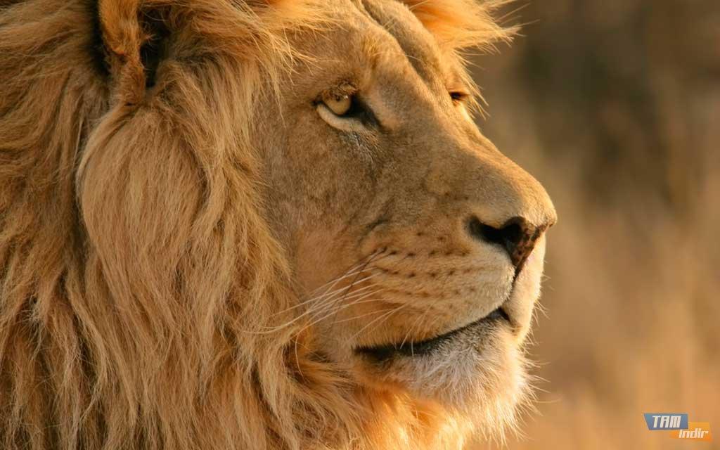 Mac os x mountain lion duvar kagitlariornek duvar kagidi1024x640