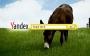 Yandex'ten Yeni Bir Reklam Filmi